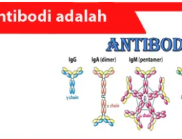 Antibodi-adalah-definisi-fungsi-sifat-mode-operasi-tipe